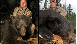 The spring bear on the left was killed with a bow at 17-yards. It weighed in at 222 pounds with a 42-inch girth and an 18 8/16 ths skull. The boar on the right is the next level up. This bear weighed in at 238 lbs. with a 19 4/16 skull and a 43-inch girth. A very nice spring boar by any measure.