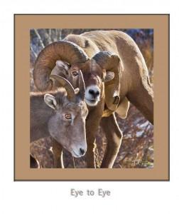#1.-BH-SheepBlogWEB