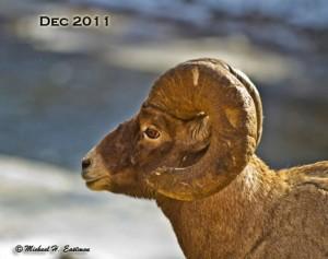#2. BH SheepBlog