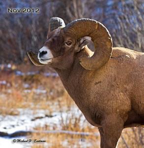 #3. BH SheepBlog