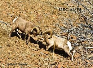 #4. BH SheepBlog