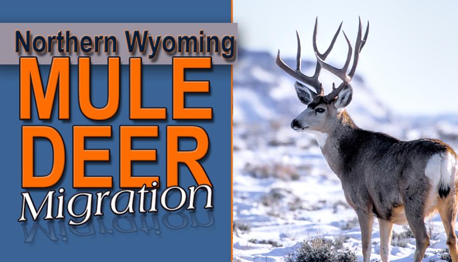 newsletter 1 15 Northern Mule Deer Imgration