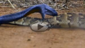 Snake_Fight_Thumbnail