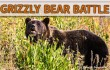 newsletter 12 15 Grizzley Bear battle