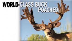 BuckPoached540x340