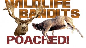 wildlife-bandits-poached2-copy