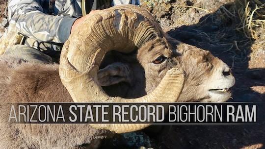 EBJ_100_AZ_Sheep_RandyS_B_Thumbnail