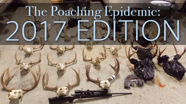 2017 poaching edition 5 17