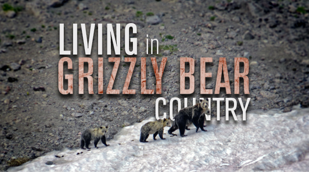 Living In Grizzly Bear Country & LIving In Grizzly Bear Country- Tips to lower your grizzly ...