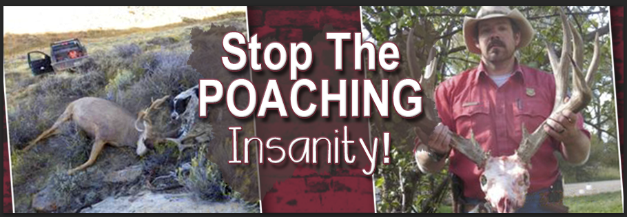 poaching hunting and michael j essay Even when hunting was a means of survival, over-hunting caused the extinction of several animals in the us alone poachers add to the problem hunting affects the environment in contrasting ways people hunted three species of camel, woolly mammoths and giant armadillos into extinction in north.