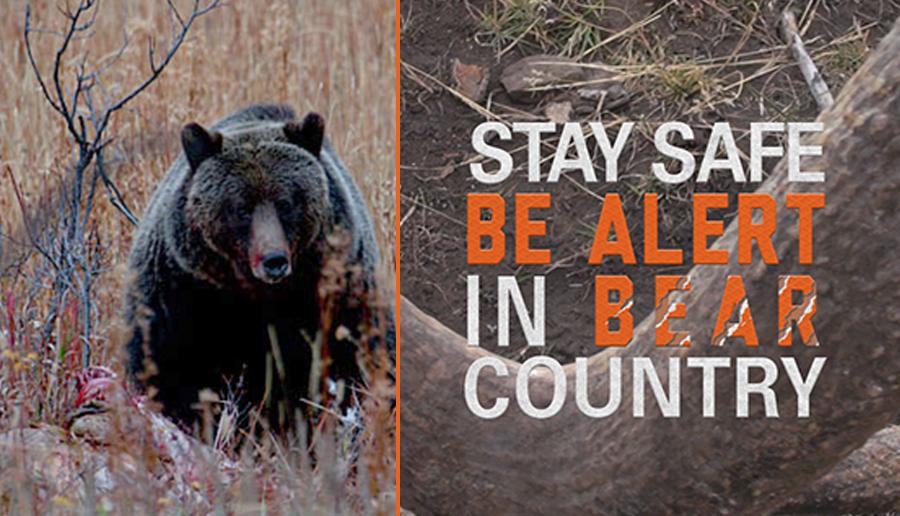 newsletter 10 15 bear