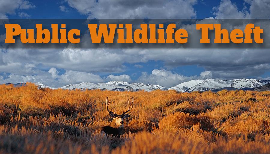 newsletter 11 15 public wildlife theft