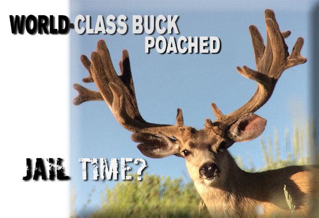 """230"""" Gross Buck Poached"""