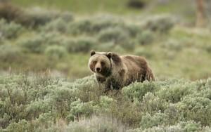 grizzMTnatparkservice