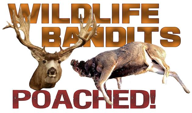 wildlife-bandits-poached2-630-copy