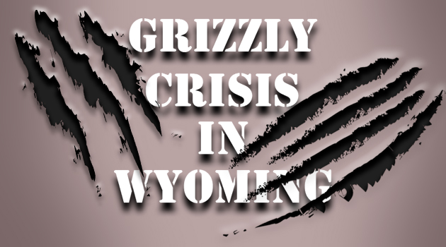 Grizzly Bear Crisis In Wyoming!