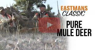 Mule Deer Archives - Eastmans' Official Blog   Mule Deer