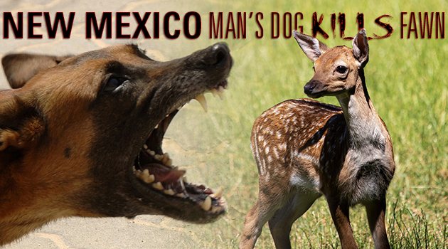 E-NEWS_BLOG_MexicoDogKillsFawn