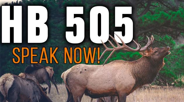 Get 6 Elk Bonus Points in One Year with This New Legislation! – HB 505