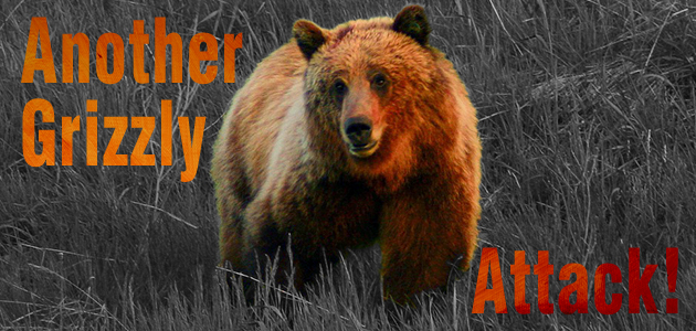 Another Grizzly Attack!